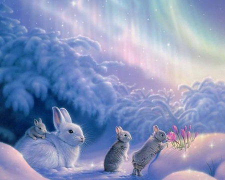 cute winter bunnies other abstract background wallpapers on
