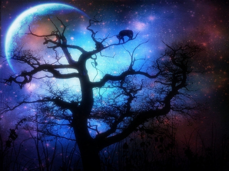 Silent Night - silent, digital art, photomanipulation, landscapes, forests, scenery, animals, night, moons, quiet, love four seasons, creative pre-made, sky, trees, silent night, plants, backgrounds, nature, branches