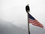 Bald Eagle on Flag Pole