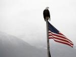Bald Eagle on Flag Pole