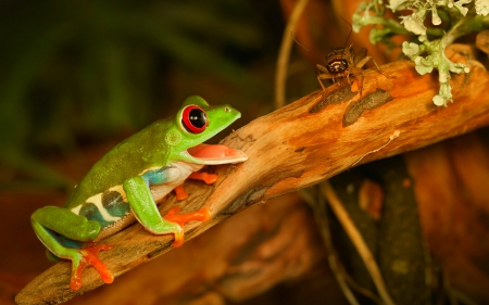 Hungry - frog, insect, reptiles, branch, animals