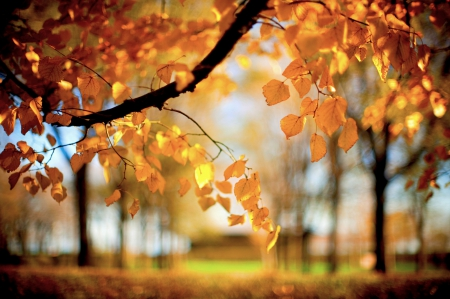AUTUMN LEAVES - forest, autumn, nature, leaves