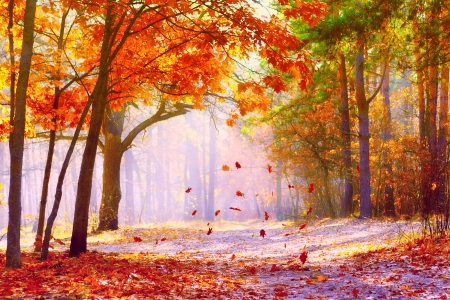 the falling leaves forests nature background wallpapers on