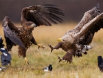 Eagles' attack