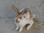 *** Bunny ***