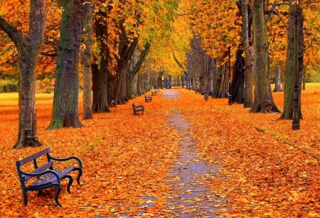 Fallen leaves road - autumn, yellow, park, trees, seasons, fallen, leaves, nature, road, other, wood