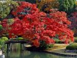 Park in Kobe, Japan