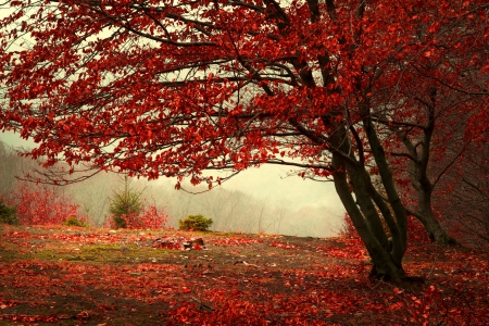 Red Autumn - red, fall, autumn, hd, beautiful, trees, mist, leaf, tree, leaves, photography