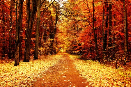fall colors forests nature background wallpapers on desktop