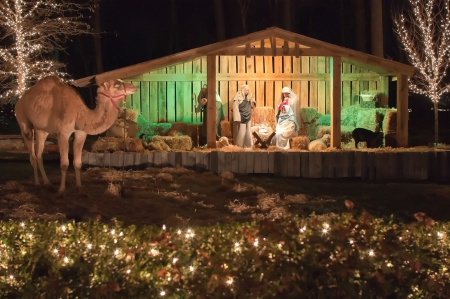Christmas Holiday Manger - Christmas, Mangers, Holidays, Nature