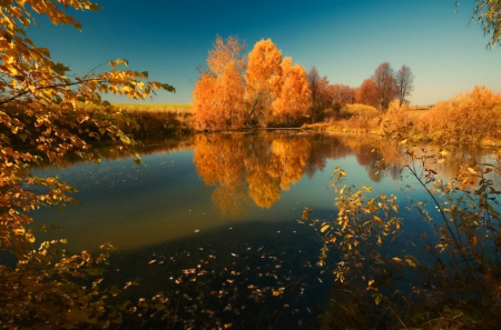 Autumn reflections - fall, autumn, riverbank, shore, falling, yellow, mirrored, leaves, river, quiet, calmness, golden, colors, sky, tranquil, serenity, nature, reflections