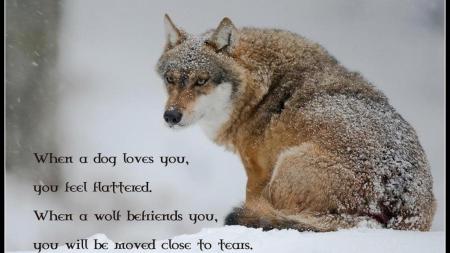 Wolf Wisdom Other Animals Background Wallpapers On Desktop Nexus