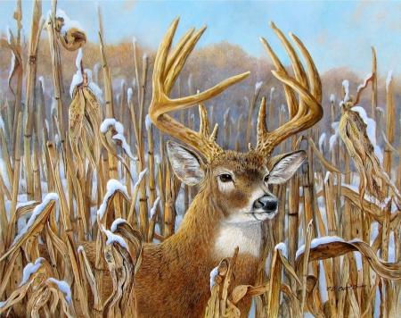 big buck wallpaper  CROWNING GLORY - Deer