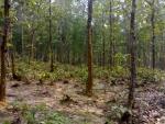 Bhawal National Park, Bangladesh