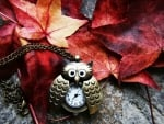 owl time for fall season