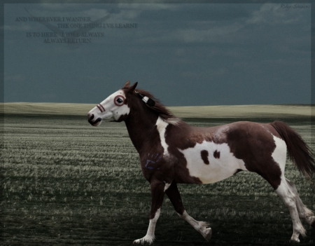 always return war horse - art, war horse, native american   painthing, horses, wallpaper, strong, pony, running, fast