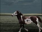 always return war horse