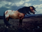 Appy war horse