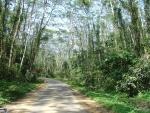 Lawachara National Park, Bangladesh