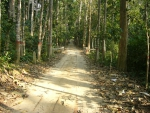 Lawachara National Park, Sylhet Bangladesh