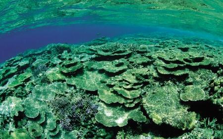 Green Underwater Coral Reef - Underwater, Nature, Coral Reefs, Oceans