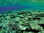 Green Underwater Coral Reef