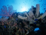 Incredible Underwater Coral Reef