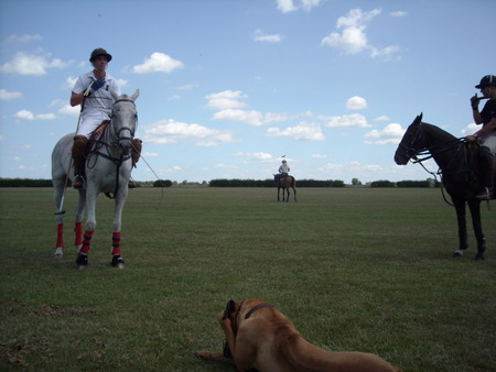 Polo horses standing around - horses, polo, field, sky
