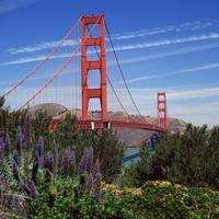Golden Gate Bridge and Lupine San Francisco California
