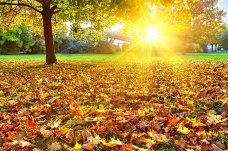 Autumn - fall, autumn, sun, grass, autumn leaves, beautiful, leaves, splendor, autumn splendor, beauty, forest, lovely, sunlight, trees, tree, sunrays, rays, autumn colors, peaceful, nature