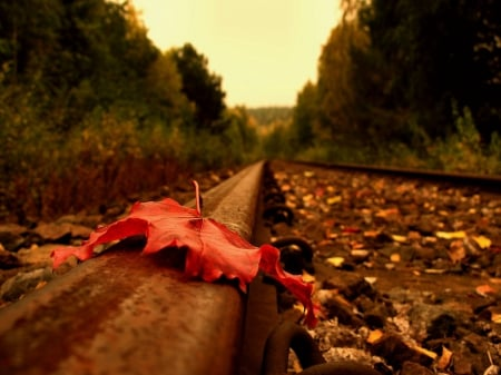 leaf - railroad, autum, leafe, oranje
