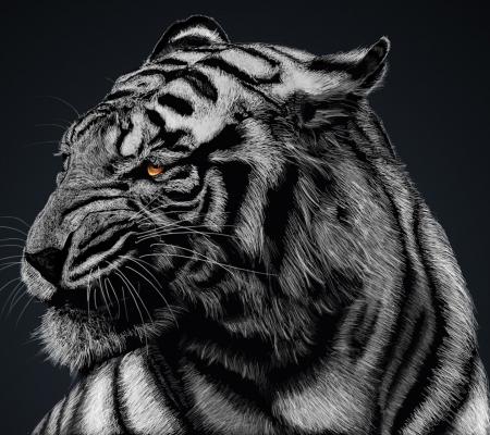 Tiger Cats Animals Background Wallpapers On Desktop Nexus Image