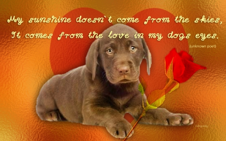 Cute Puppy Dogs Animals Background Wallpapers On Desktop
