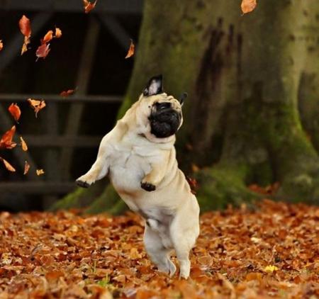 Happy Dog Dance Gif Happy Dog Dance Happy Friday
