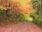 Maybury State Park, Michigan