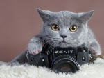 Gray-cat-with-camera