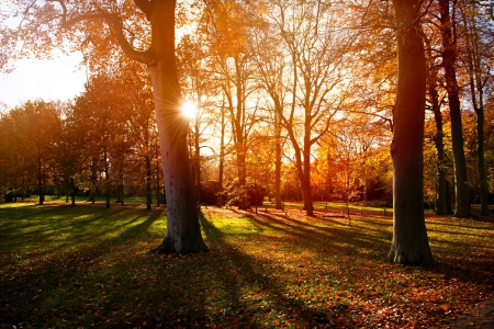 Beautiful Autumn - forest, autumn, sun, green, Beautiful, nature, trees, sky