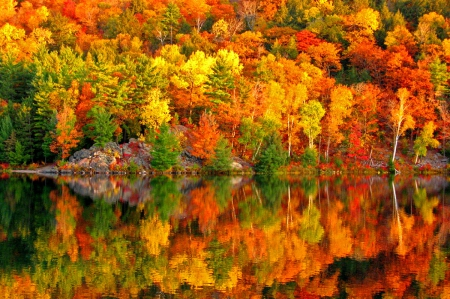 Autumn reflections - fall, autumn, riverbank, shore, falling, beautiful, foliage, mirrored, nice, river, forest, quiet, calmness, lovely, colors, place, trees, lake, water, serenity, nature, reflections
