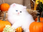 ♥~Harvest Kitty~♥