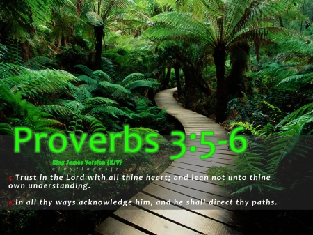 Proverbs 3:5-6 Bible verse - Other & Nature Background