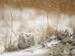 Snow owl in storm