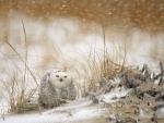 Snow owl in storm
