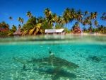 Shark under the Lagoon South Pacific