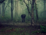 Elephant in Forest!