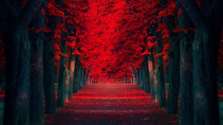 Red Path - forest, red, nature, love