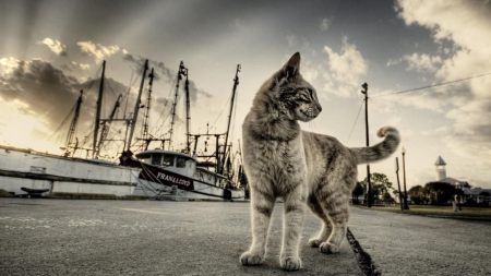 Cat - cloud, ship, summer, dust, cat, sky, animal