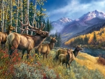 Elk Anthem