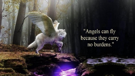 angels can fly - Other & Animals Background Wallpapers on ...