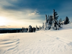 Scenic Winter Scene