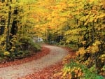 Hapgood State Forest, Vermont